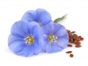 flaxseed flax-flower