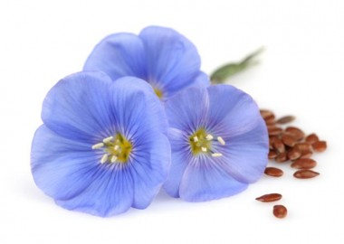 flaxseed flax-flower